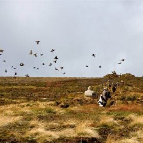 leadhills grouse